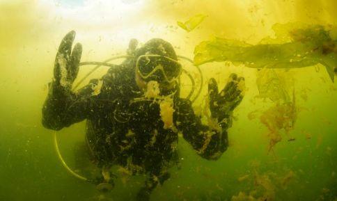 Marmara Denizi'ndeki salya, su altını da sardı