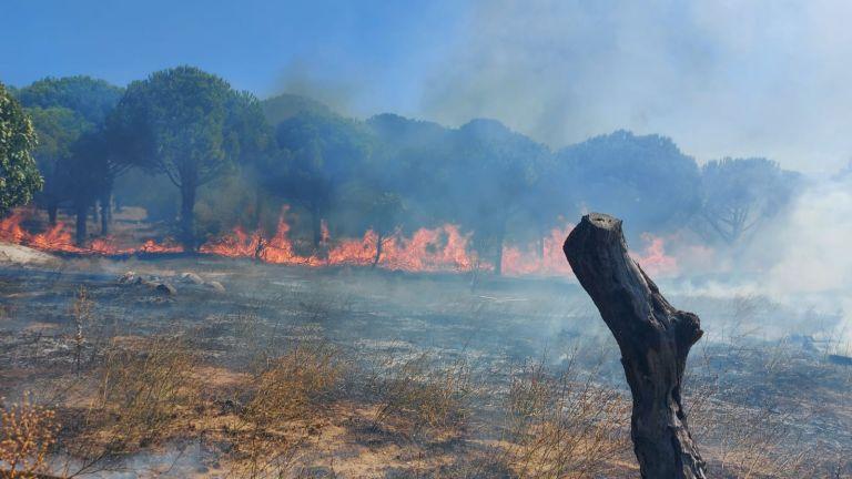 Çamlık alanda çıkan yangın kontrol altına alındı